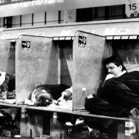 f27-crufts-dog-show-man-asleep-with-dogs