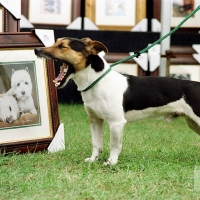 """East of England Show: """"Rhino"""" the jack russell (owned by Martin Brockelhurst of Bakewell) admires some doggy art. Pic by martinneeves.com 1223B/9"""